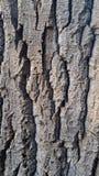 Barke des alten Baums Stockfoto