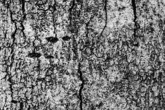 Barke des alten Baums Lizenzfreie Stockbilder