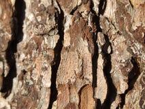 Barke des Baums Lizenzfreies Stockbild