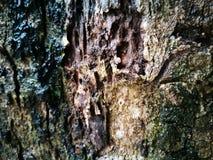 Barke des Baums Lizenzfreie Stockbilder
