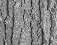 Barke des Baums Schwarzes Bild des Whit Lizenzfreies Stockfoto