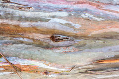 Barke des Eukalyptushintergrundes Lizenzfreie Stockfotografie