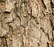 Barke des gezierten Baums Stockfoto