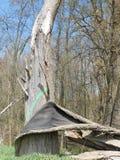 Barke, die weg Baum in einem Blatt abzieht Stockbilder