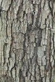 Barke eines alten Baums Stockfoto