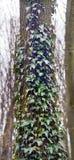 Barke eines alten Baums Stockbild