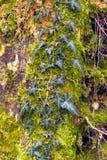 Barke eines alten Baums Lizenzfreies Stockbild