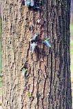 Barke eines alten Baums Stockfotografie