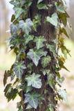 Barke eines alten Baums Lizenzfreie Stockfotografie