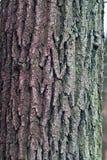 Barke eines alten Baums Lizenzfreie Stockbilder
