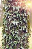 Barke eines alten Baums Stockbilder