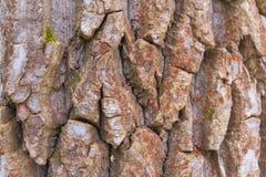 Barke eines alten Baums stockfotos