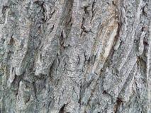 Barke eines Baumhintergrundes Lizenzfreies Stockbild