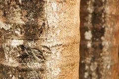 Barke eines Baums Lizenzfreies Stockfoto