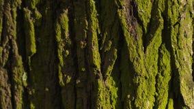 Barke eines Baums stock video
