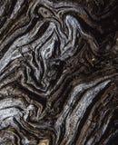 Barke eines Baums Lizenzfreie Stockfotografie