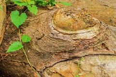 Barke eines Baums Lizenzfreies Stockbild