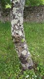 Barke eines Baums im grünen Hintergrund Lizenzfreies Stockfoto