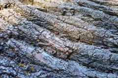 Barke eines Baums Kopieren Sie Platz Konzepthintergrund und -beschaffenheit Stockbild