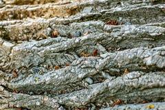 Barke eines Baums Platz für die Aufschrift Konzepthintergrund Stockbild
