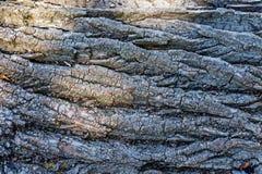 Barke eines Baums Platz für Text Konzepthintergrund und -beschaffenheit Lizenzfreie Stockbilder