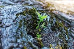 Barke eines Baums und der Anlage Konzepthintergrund und -beschaffenheit Lizenzfreie Stockfotos