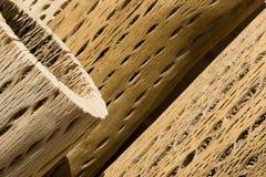 Barke eines Kaktus Lizenzfreies Stockbild
