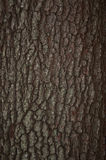 Barke-Hintergrund Lizenzfreies Stockbild