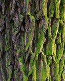 Barke, Rechnung, Bäume stockfoto