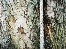 Barke und Seil stockbild