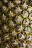 Barke von Ananas Lizenzfreies Stockbild