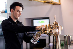 Barkeeper pouring beer in glass at counter. Barkeeper pouring beer in glass from faucet at bar counter stock photos