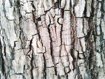 barkeeperen Gammal Wood trädtexturbakgrund Uppvaktar det naturliga skället för closeupen royaltyfri bild
