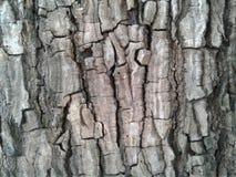 barkeeperen Gammal Wood trädtexturbakgrund Uppvaktar det naturliga skället för closeupen arkivbild
