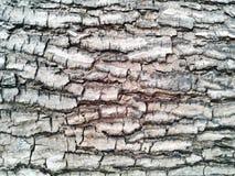 barkeeperen Gammal Wood trädtexturbakgrund Uppvaktar det naturliga skället för closeupen arkivfoton
