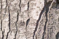 barkeeperen Träd Träskäll E Natur r Trä texturerar naturliga texturer royaltyfri fotografi