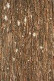 Barken-alte hölzerne Beschaffenheit für Umwelt Stockfotografie