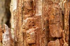 Barken-Baum-Beschaffenheits-Makro Lizenzfreie Stockbilder