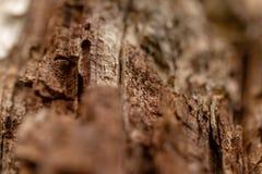 Barken-Baum-Beschaffenheits-Makro Lizenzfreies Stockbild