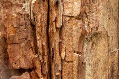 Barken-Baum-Beschaffenheits-Makro Stockfotografie