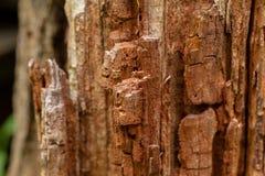 Barken-Baum-Beschaffenheits-Makro Lizenzfreies Stockfoto