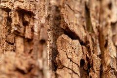 Barken-Baum-Beschaffenheits-Makro Lizenzfreie Stockfotos
