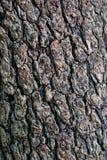 Barken-Baum-Kiefern-Zedernzusammenfassung Beschaffenheitshintergrund Stockfotos