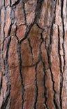 Barkenbaum gemasert Stockfotografie