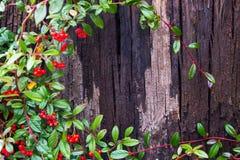 Barkenbaumbeschaffenheit mit Blättern stockfoto