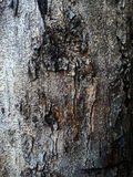 Barkenbaummuster Stockfotografie