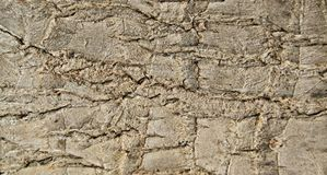 Barkenbeschaffenheit, Detail Stockfoto