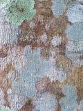 Barkengummibaum-Beschaffenheitshintergrund Stockbild
