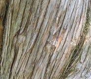 Barkenholzbeschaffenheit Stockbilder