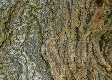 Barkenmuster stockbild